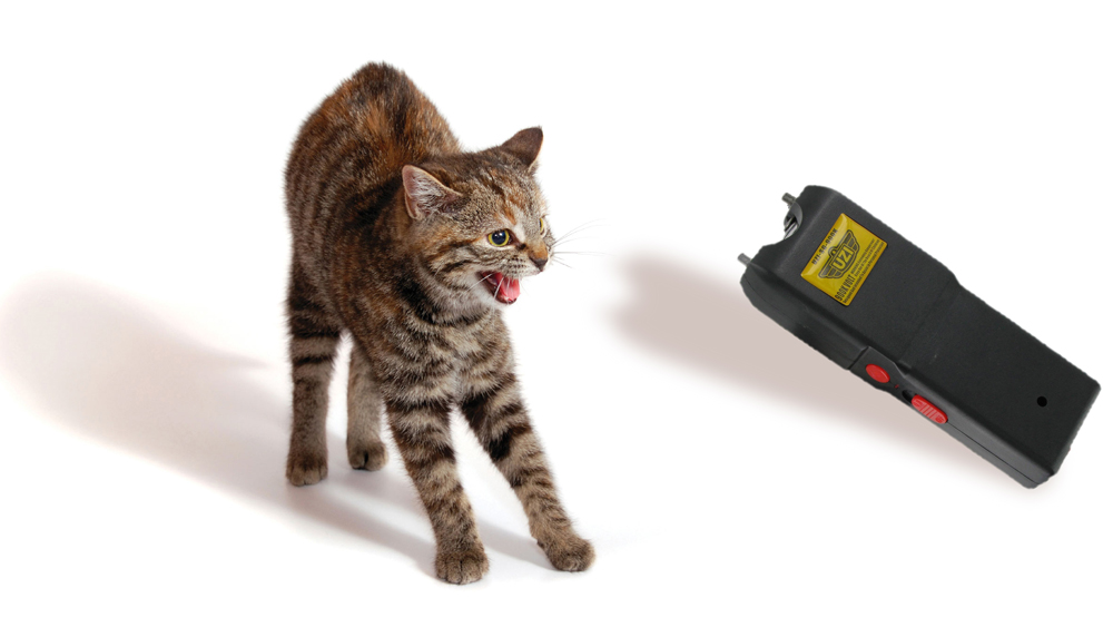 Cat_and_Stun_Gun_v2_1000px_wide