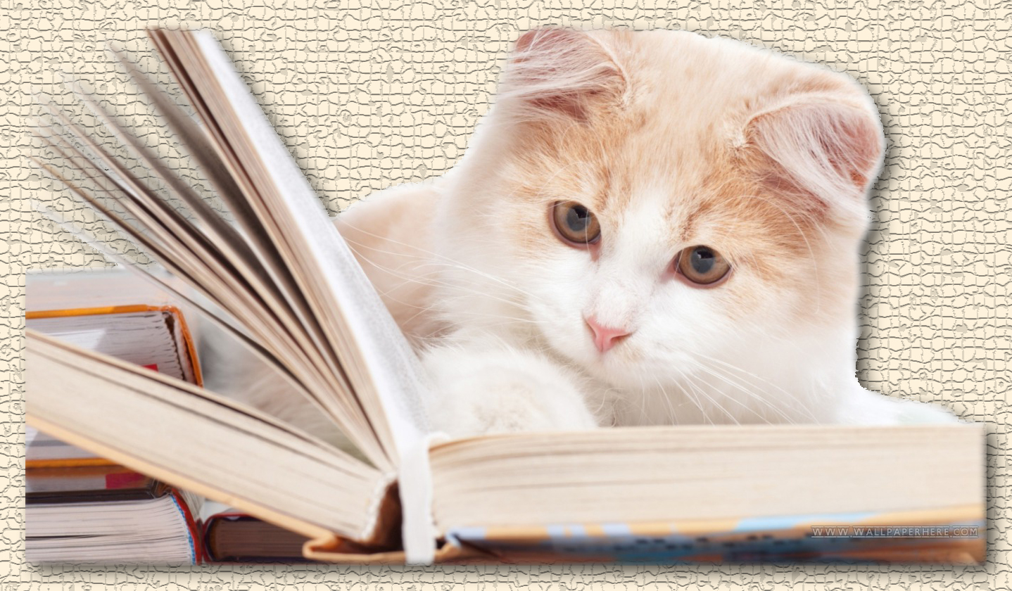 Cat_reading_book